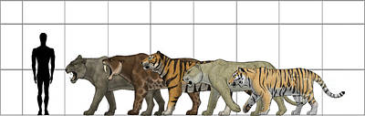Tigris Digital Art - Big Felines Size Chart by Vitor Silva