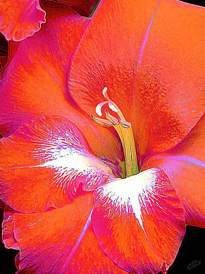 Gladiolas Photograph - Big Glad In Orange And Fuchsia by ABeautifulSky Photography