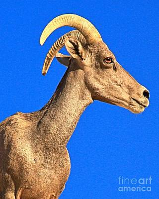 Photograph - Big Horn Against Blue by Adam Jewell