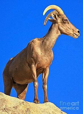 Photograph - Big Horn Against The Sky by Adam Jewell