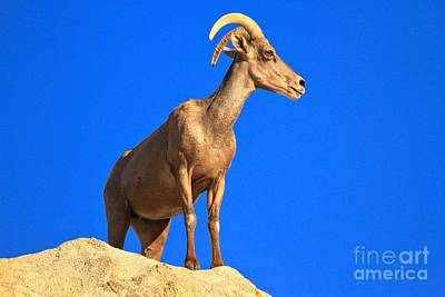 Photograph - Big Horn On The Edge by Adam Jewell