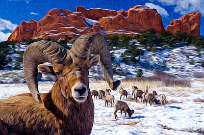 Big Horn Sheep At The Garden Art Print