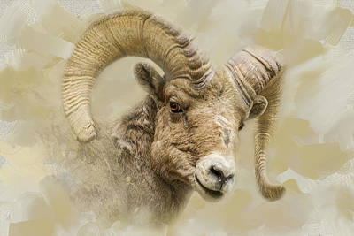 Laura James Photograph - Big Horn Sheep by Laura James