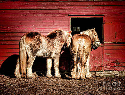 Big Horses Art Print by Olivier Le Queinec