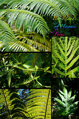 Photograph - Big Island Of Hawaii Ferns 2 by Colleen Cannon