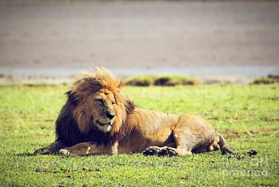 Exotic Photograph - Big Male Wild Lion On Savannah. Ngorongoro In Africa. by Michal Bednarek