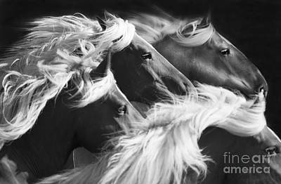 Draft Horses Photograph - Big Mares Run by Carol Walker