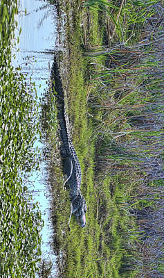 Photograph - Big Old Gator by Gregory Scott