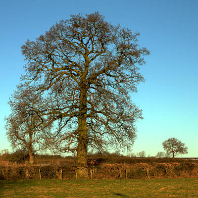 Photograph - Big Old Tree by Jeremy Hayden