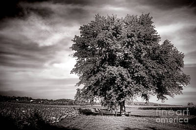 Photograph - Big Old Tree by Olivier Le Queinec