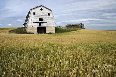 Photograph - Big Ole Barn by Dee Cresswell