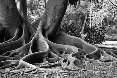 Big Roots Art Print