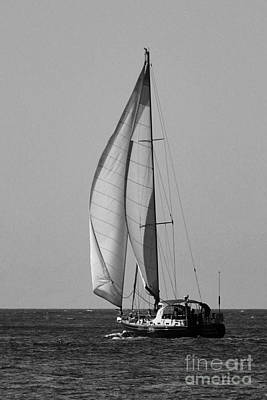 Photograph - Big Sails In Black And White by Bob Sample