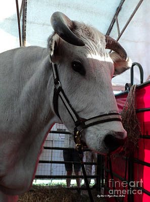 Photograph - Big Steer by Megan Dirsa-DuBois