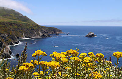 Photograph - Big Sur Loves Yellow By Diana Sainz by Diana Raquel Sainz