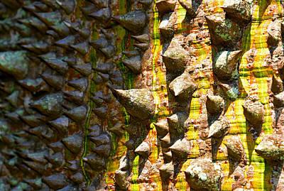 Mountins Photograph - Big Thorn by David Lee Thompson