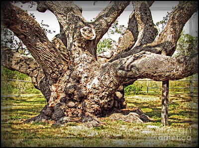 Photograph - Big Tree Old Live Oak - Rooted In History By Ella by Ella Kaye Dickey