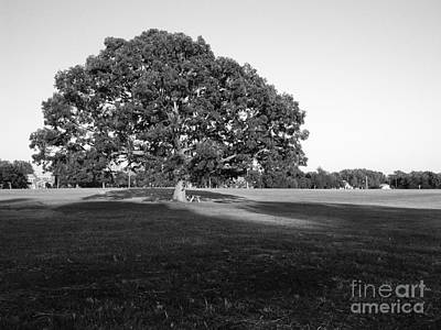Photograph - Big Tree by Tom Brickhouse