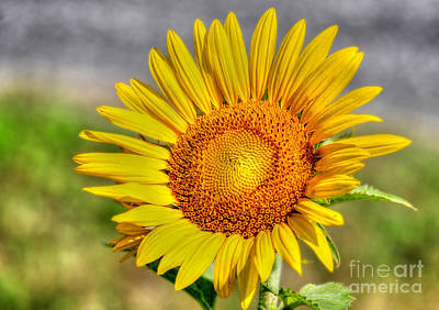 Photograph - Big Yellow by Kathy Baccari