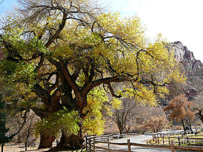 Photograph - Big Yellow Tree by Rachel Gagne