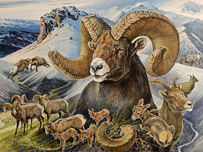 Painting - Bighorn Lifescape by Steve Spencer