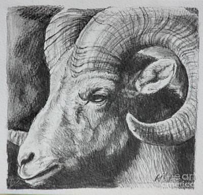 Ram Sheep Drawing - Bighorn Ram II by E Jane Lazenby
