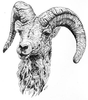 Ram Sheep Drawing - Bighorn Ram by Lana Tyler