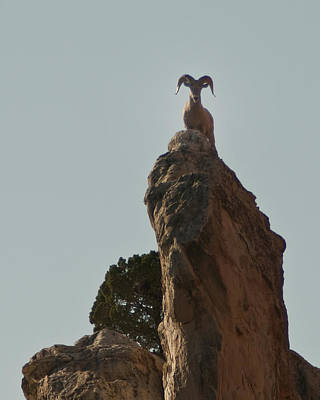 Photograph - Bighorn Ram by Lee Kirchhevel