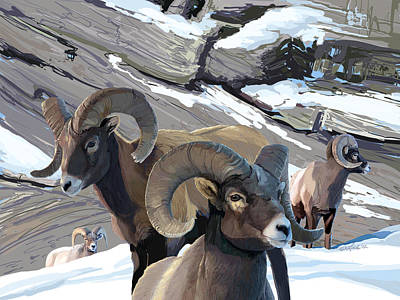 Bighorn Rams Art Print
