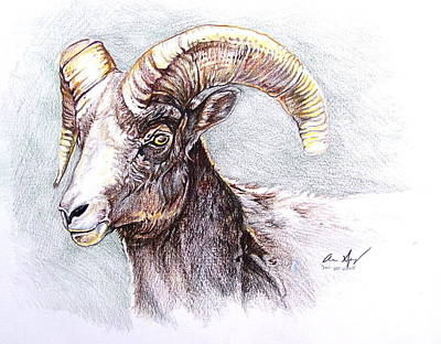 Mountain Goat Drawing - Bighorn Sheep by Aaron Spong