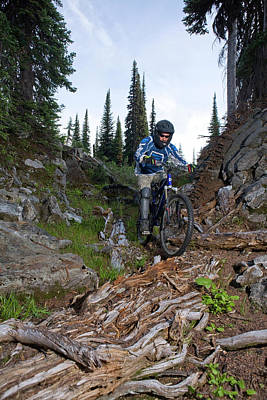 Gnarly Photograph - Biking In Alpine Meadow, Sol Mountain by Craig Pulsifer