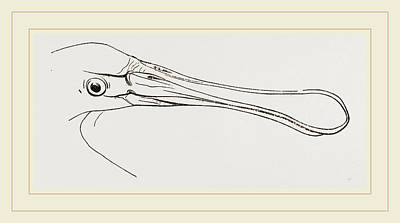 Spoonbill Drawing - Bill Of Spoonbill by Litz Collection