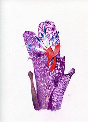 Painting - Billbergia 'halleluja' by Penrith Goff