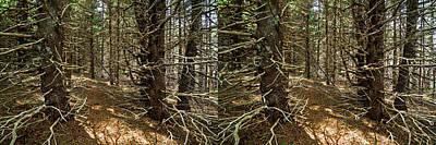 Photograph - Billions Of Branches by Matt Molloy