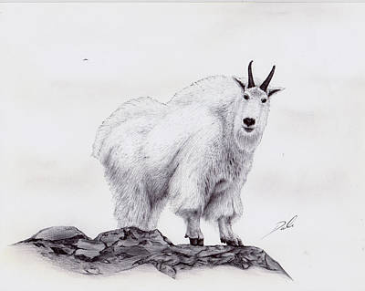 Mountain Goat Drawing - Billy by Dale