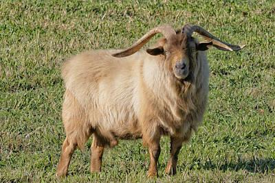 Spot Of Tea - Billy Goat by Jim Thompson