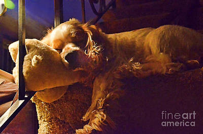 Bingos Nap Photoart Art Print by Debbie Portwood