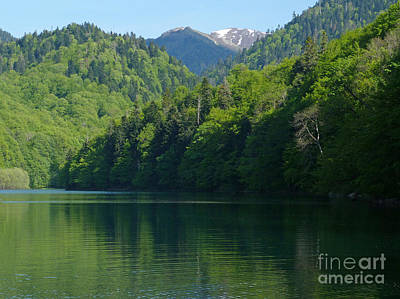 Photograph - Biogradska Gora National Park - Montenegro by Phil Banks