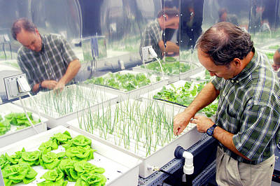 Lettuce Photograph - Bioregenerative Life Support Research by Nasa