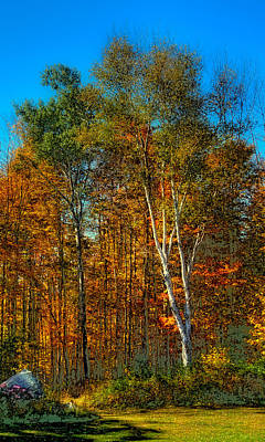 Birch Among The Maples Art Print by David Patterson