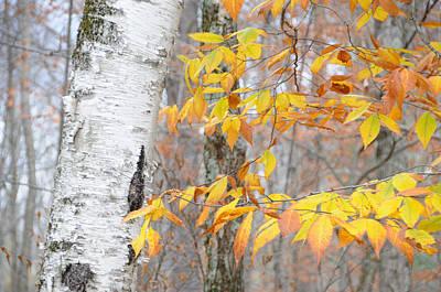 Birch And Beech Art Print