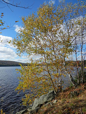 Photograph - Birch And Lake 1 by Pema Hou