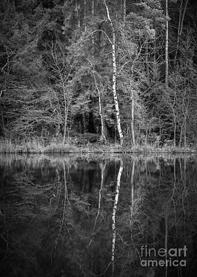 Photograph - Birch And Reflections by Alexander Kunz