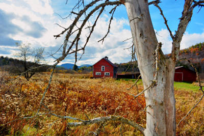 Photograph - Birch Barn by Emily Stauring