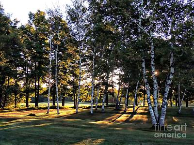 Photograph - Birch Grove by Marcia Lee Jones
