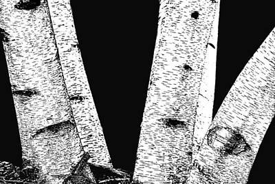 Photograph - Birch On Black by Nadalyn Larsen
