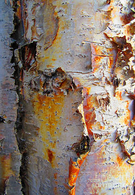 Photograph - Birch Paper by Heather  Hiland