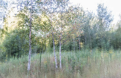 Photograph - Three Birch Trees by Patti Deters