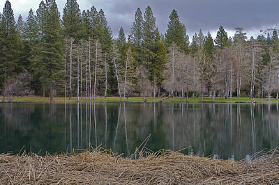 Photograph - Birch Pond 2 by SC Heffner