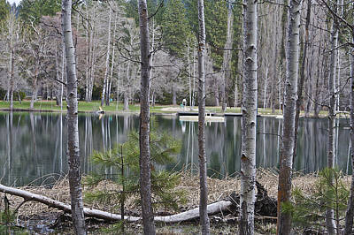 Photograph - Birch Pond  by SC Heffner
